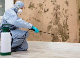 What are the Signs and Symptoms of Mold Exposure?