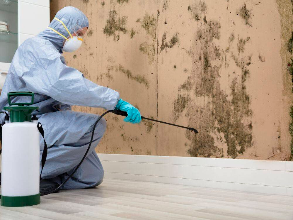 Commercial Mold Remediation Services