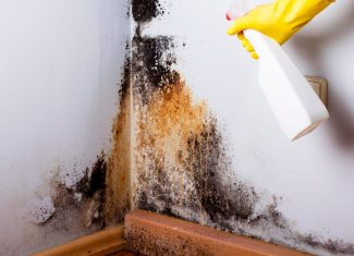 How to Get Rid of Mold in House